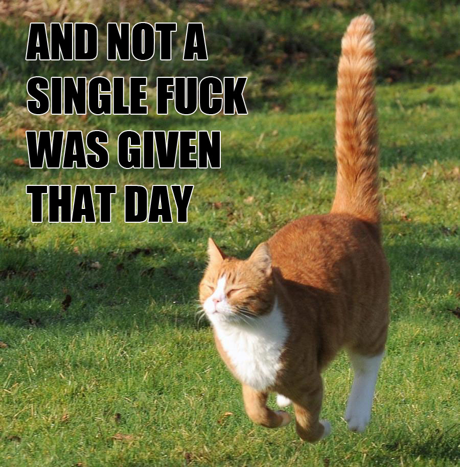 and-not-a-single-fuck-was-given-that-day-cat
